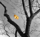 Adversity: Black and white tree with yellow falling leaf
