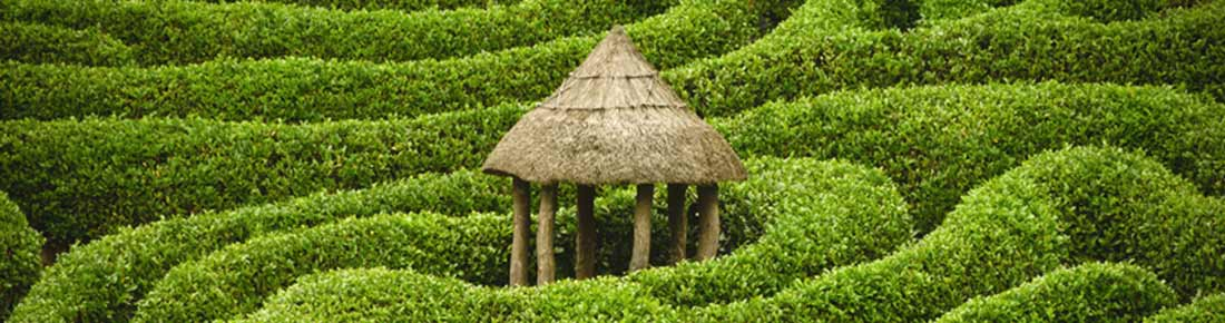 Straw hut in the middle of a hedge maze