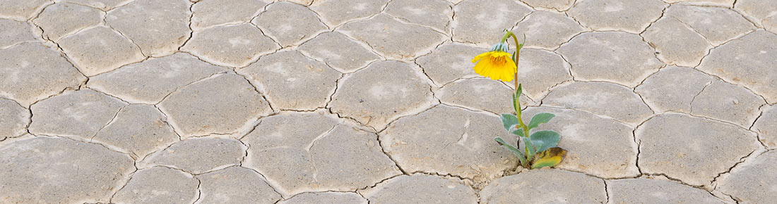 Flower growing from a crack in the dry dessert floor