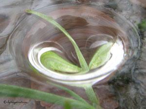 Grief: Green leaf frozen in water